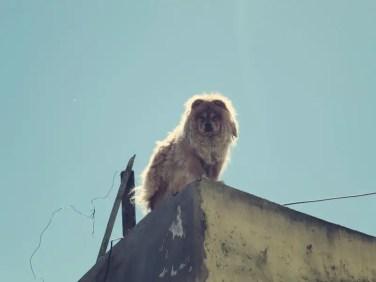 Löwe oder Hund?