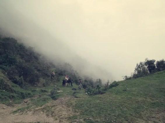 Ende des Nebelwaldes - Angekommen auf 3600m