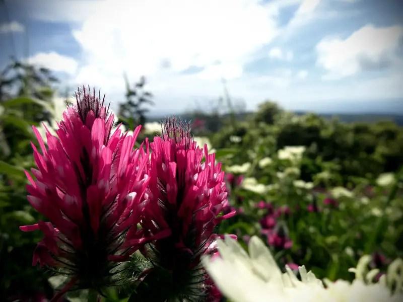 Blüten im Karmelgebirge