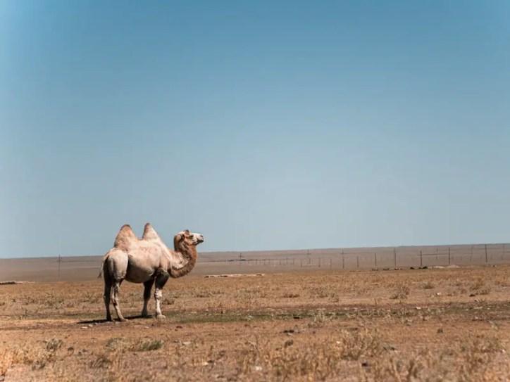 Saty Village Kasachstan Reisetipps