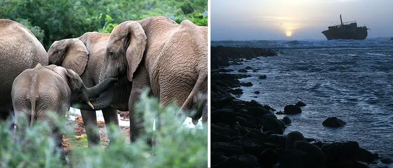 sudafrika-mighty-traveliers