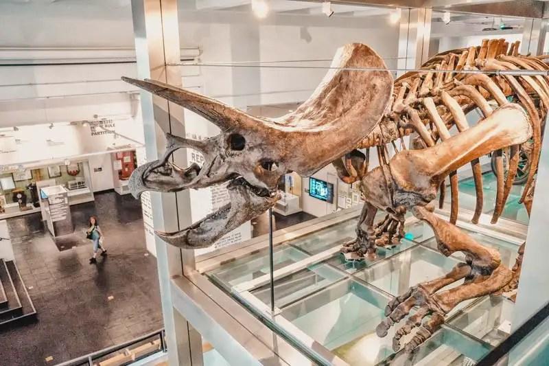 Ulster Museum - Belfast Attracties