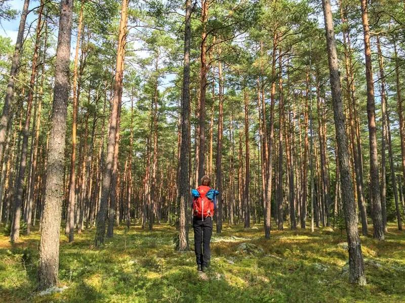estland_lahemaa_nationalpark_IMG_8102
