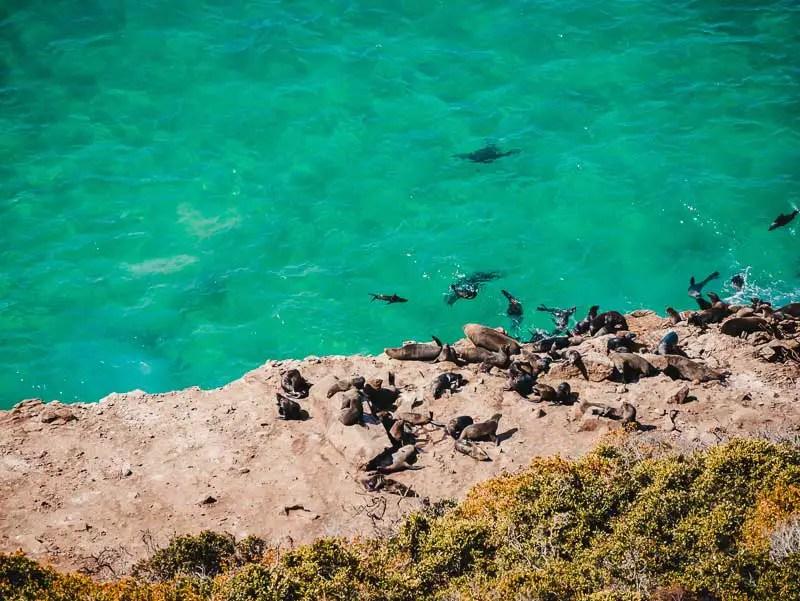 Robberg Nationalpark – Garden Route Highlights, Sehenswürdigkeiten & Reisetipps