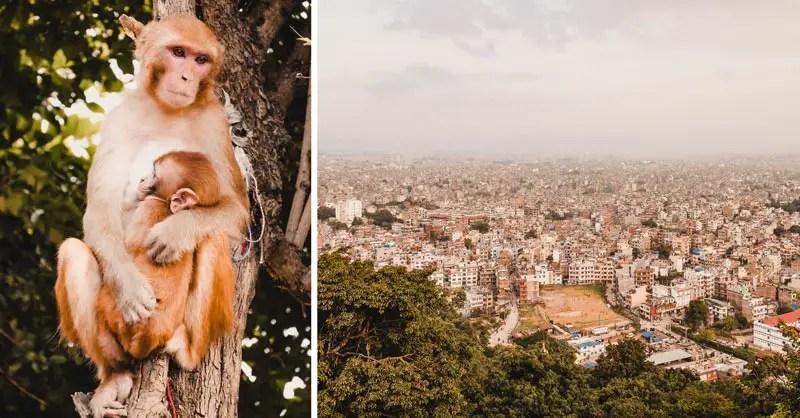 Kathmandu Sehenswürdigkeiten monkey tempel