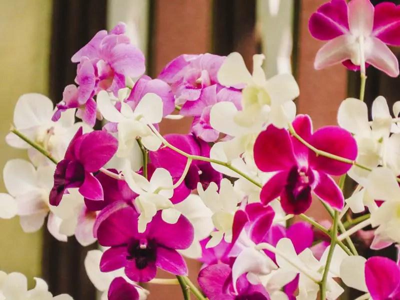 Lake Gardens und Orchid Garden – Kuala Lumpur Sehenswürdigkeiten und Highlights in 2 Tagen