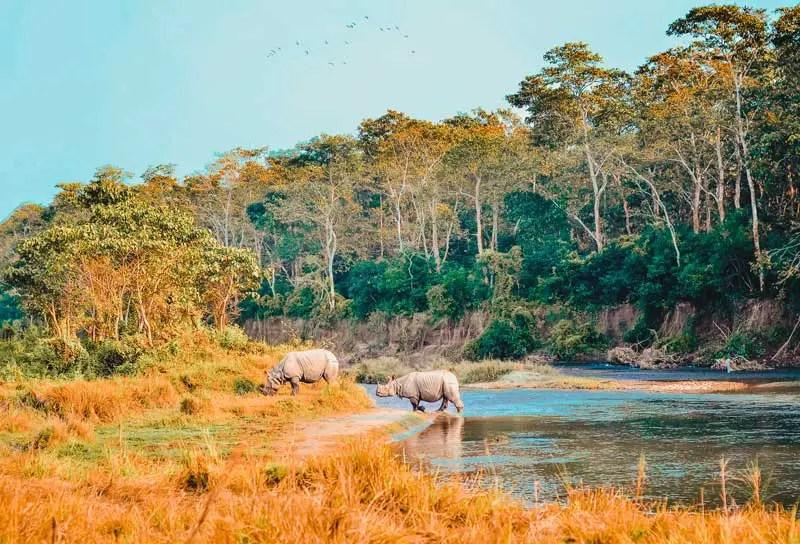 Nepal Sehenswürdigkeiten Chitwan Nationalpark