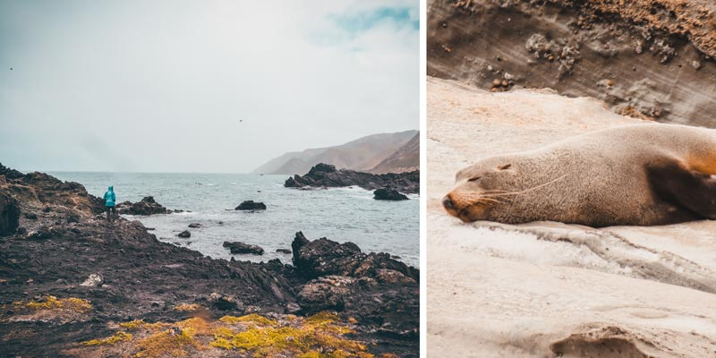 Neuseeland Nordinsel Highlights Cape Palliser