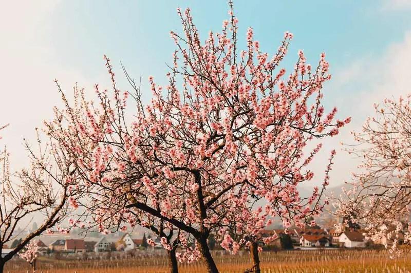Reiseziele April Rheinland Pfalz