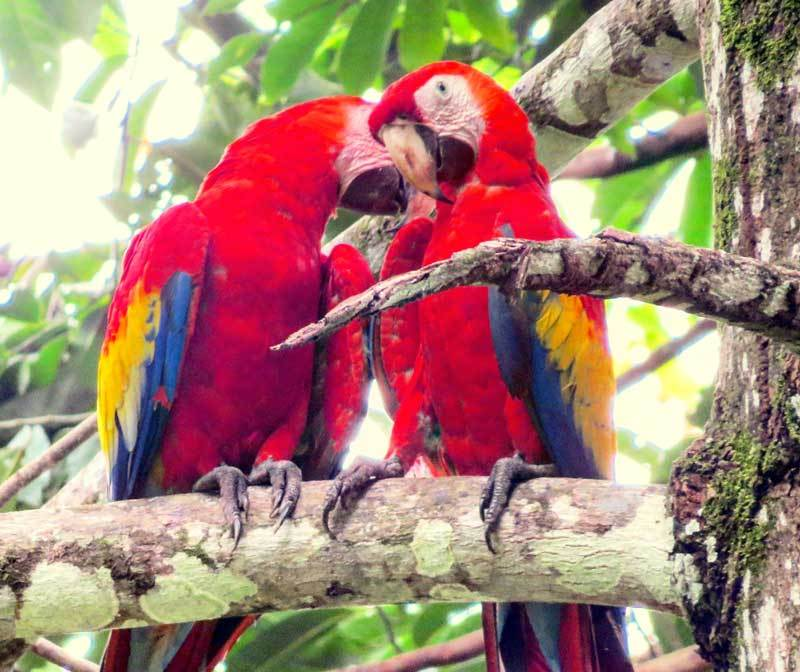 Reiseziele Juni Costa Rica