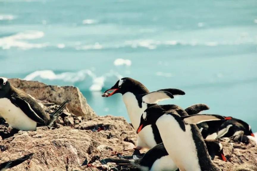 Reiseziele November Antarktis