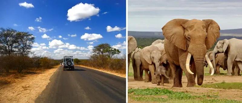 sueadafrika_elefanten_roadtrip
