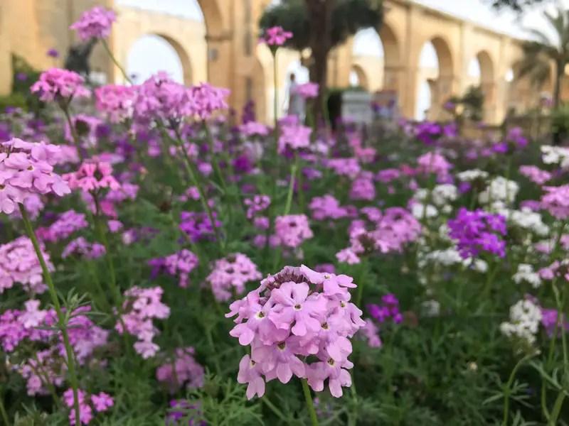 valletta_Upper-Barrakka-Garden_IMG_7599