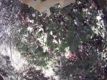 Im Baum. Oben ist die Meteosonde zu sehen