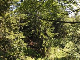 Im Baum. Gut sichtbar die Schnur zwischen Fallschirm und Box respektive Sonde