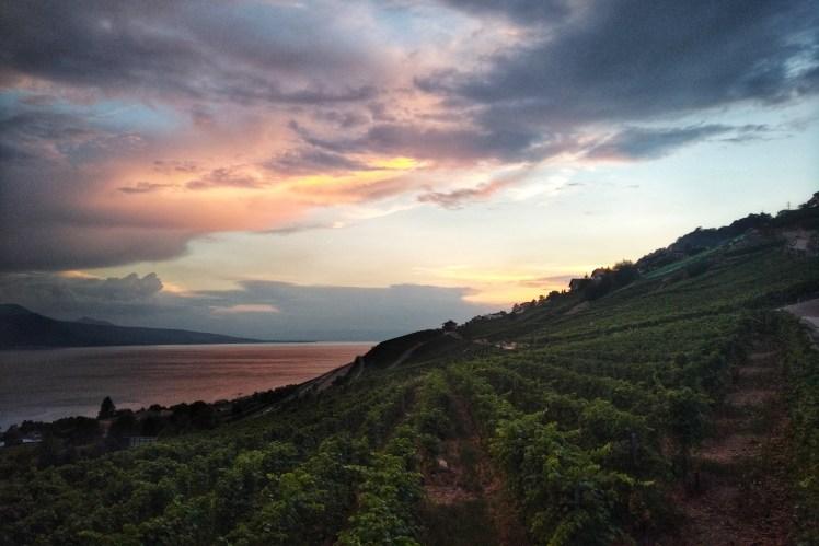 Fête des Vignerons vineyard