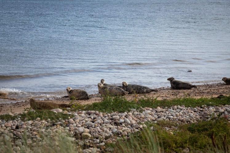 Seals on the coast of Northern Scotland