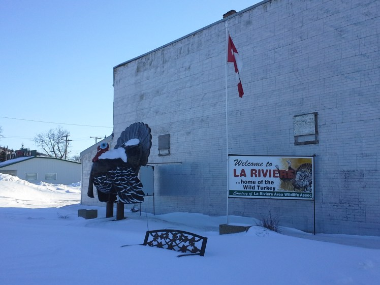 A cold, wild turkey, ready for Christmas in La Riviere, Manitoba.