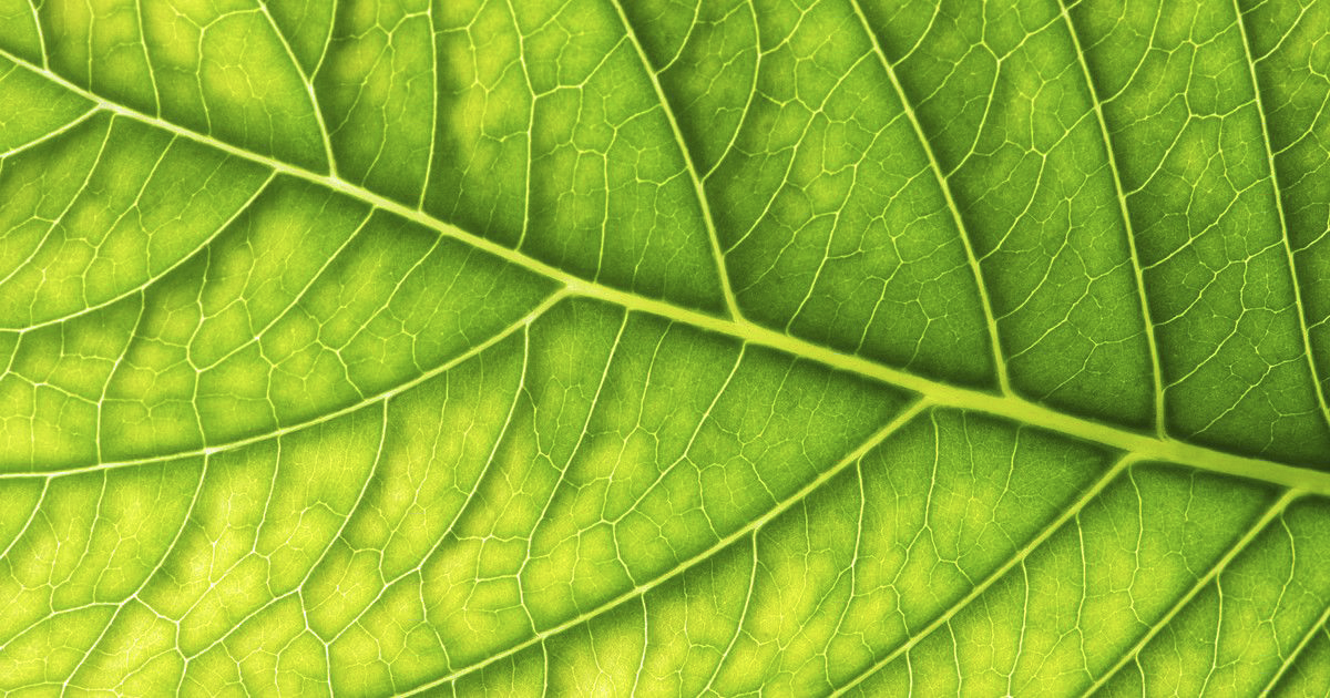BIONIC LEAF 2.0 and artificial photosynthesis