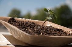 fastfoodplant (8)