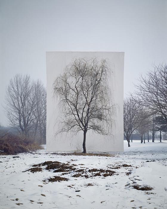 5.Myoung Ho Lee,  tree, contemporary (he)art, contemporary art, wevux, giulia serafin, arte contemporanea, alberi, natura, fotografia, tele, paesaggio, nature, photograpy, canvas, landscape, minimal, surreal, surreale, Corea, korean artist