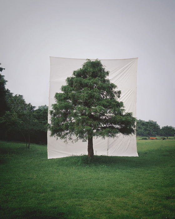 6.Myoung Ho Lee,  tree, contemporary (he)art, contemporary art, wevux, giulia serafin, arte contemporanea, alberi, natura, fotografia, tele, paesaggio, nature, photograpy, canvas, landscape, minimal, surreal, surreale, Corea, korean artist