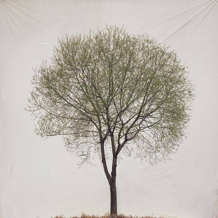 8.Myoung Ho Lee,  tree, contemporary (he)art, contemporary art, wevux, giulia serafin, arte contemporanea, alberi, natura, fotografia, tele, paesaggio, nature, photograpy, canvas, landscape, minimal, surreal, surreale, Corea, korean artist