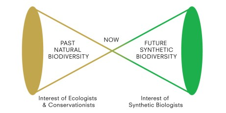 extinction_convergence_diagram2