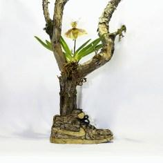 flowersgrowinginnike-6