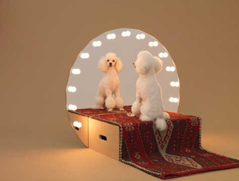 Playful-Puppy-Shelters-11