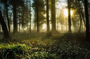 Thrilling-and-Mysterious-Pictures-of-Slovenian-Forests5-900x595