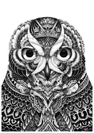 owl-portrait-2015-830x1167