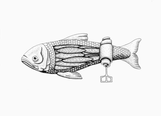 pesce-scatoletta-di-sardine