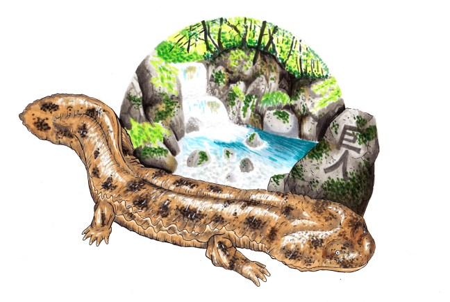 salamandra-gigante-giapponese