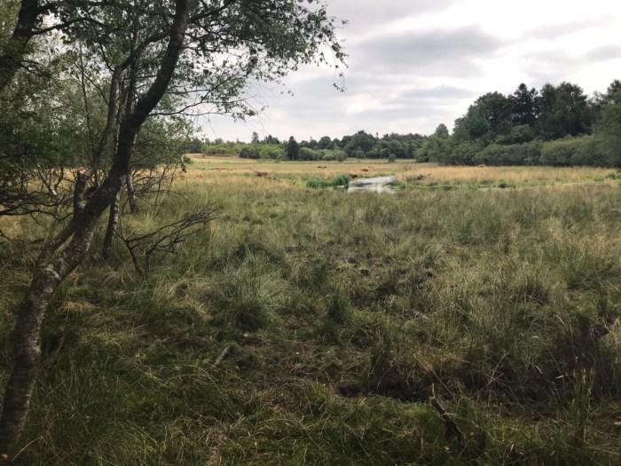 Hyggelige landskaber til vandringen ved Varde Å