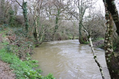 Boro River Enniscorthy 2017-03-03 (7)