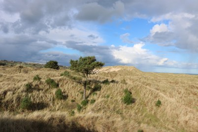 Curracloe Dunes White Gap 2017-02-27 15.22.56 (5)