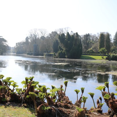 Johnstown Castle Gardens 2017-03-27 11.06.06 (78)