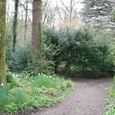 Newtownbarry Gardens Bunclody 2017-03-28 13.07.02 (28)