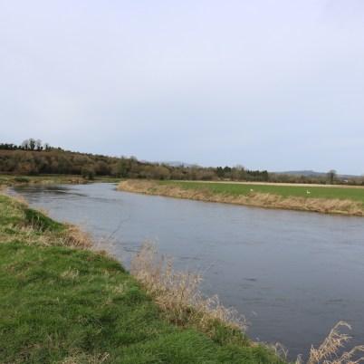 Slaney River, Scarawalsh Bridge 2017-03-02 (4)