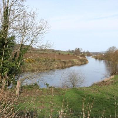 Slaney River ballycarney 2017-03-02 (14)