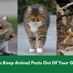 How To Keep Animal Pests O