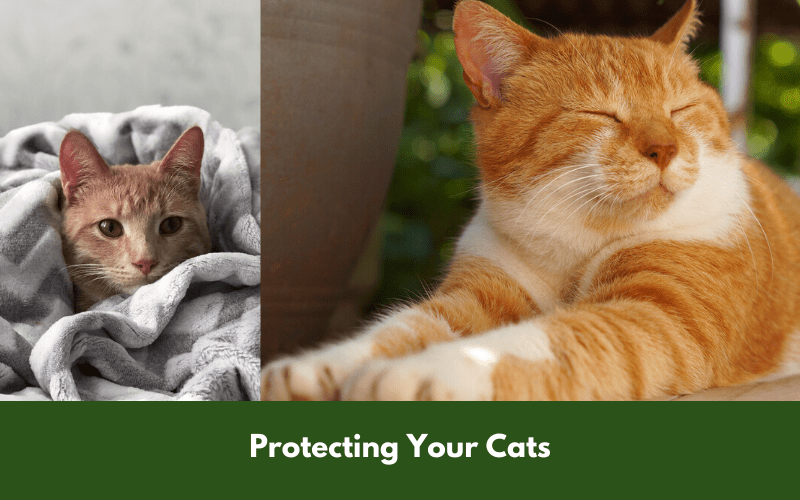 Protecting Your Cats