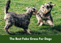 The Best Fake Grass For Dogs