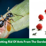 Getting Rid Of Ants From The Garden!