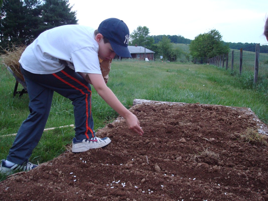 A boy tends to his garden in this photo from the Shenandoah County Office of Virginia Cooperative Extension.