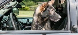 Wake Forest Police K-9 Team Can Fetch With the Best
