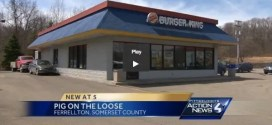 Man Tries to Feed Bacon to Pig at Burger King But Woman Gets Bit