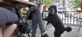 Fido al fresco? NY weighs allowing outdoor dining with dogs