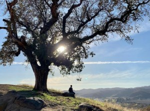 person on hill under an oak tree at Pena Adobe